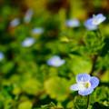 Photos: 我が世の春