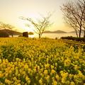 Photos: 菜の花や・・・日は西に