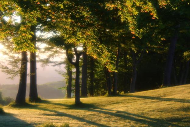 朝陽を浴びる木々