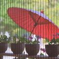 Photos: 花と傘
