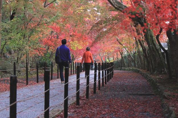 Photos: 光明寺の紅葉