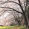Photos: 公園の春