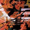 Photos: 金戒光明寺