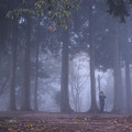 霧の中のカメラマン