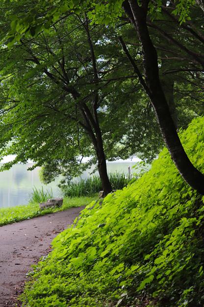 湖畔の小路