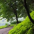 Photos: 湖畔の小路