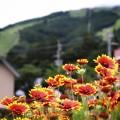 Photos: 花で彩られる白馬