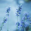 Photos: 青の世界