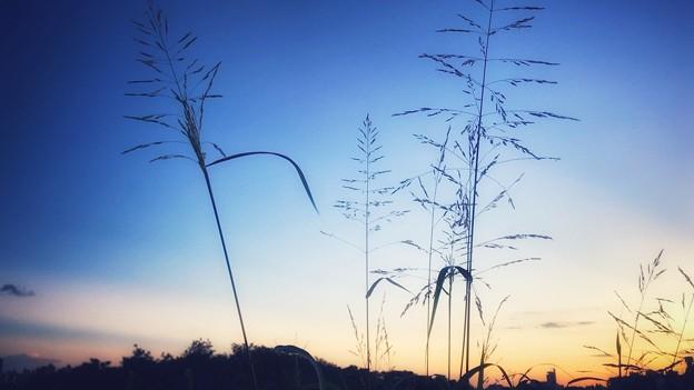 雑草も綺麗に見える夕空