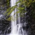 Photos: 箕面の大滝