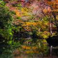Photos: 水辺に秋