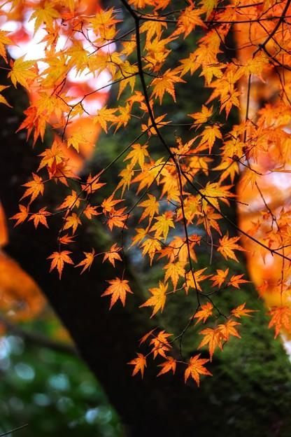 しっとりと秋