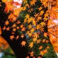 Photos: しっとりと秋