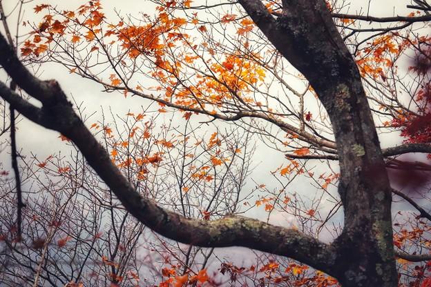 過ぎ行く秋
