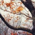 Photos: 過ぎ行く秋
