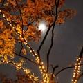 Photos: イルミを楽しむお月様