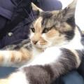 Photos: 野良猫 さくら