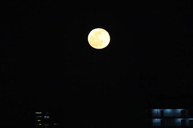 1月11日今夜は満月です(スルーして下さい)
