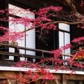 Photos: 光明寺