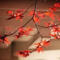 Photos: 光明寺のモミジ