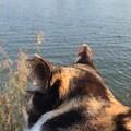 Photos: さくらと淀川を眺める(スルー願います)