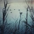 羽を休める水鳥たち