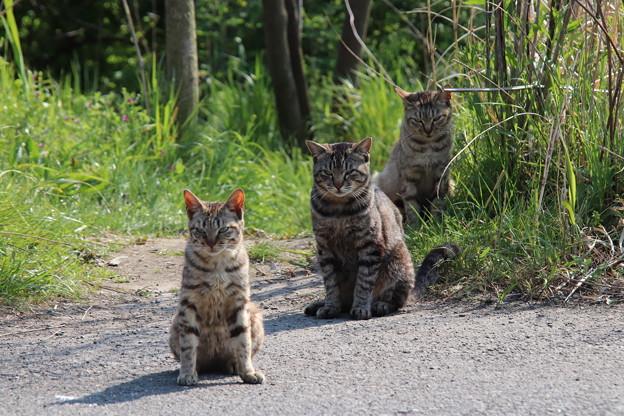 野良猫もコロナ対策(一定の距離を保つ)