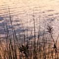 夕暮れの水辺