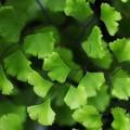 Photos: My green