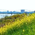 Photos: 淀川の春