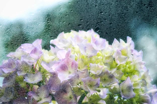 雨の紫陽花(レタッチ)