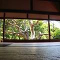 Photos: 宝泉院 額縁庭園