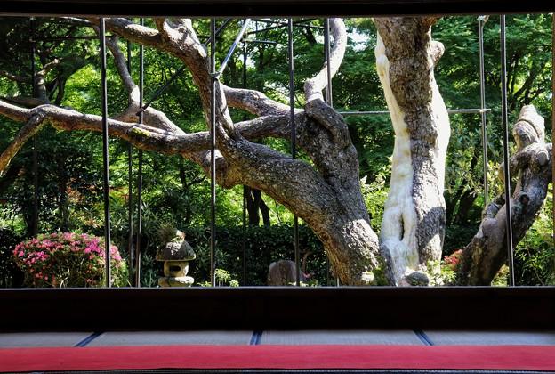 宝泉院 額縁庭園(2)