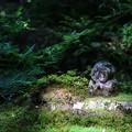 Photos: 三千院の石仏