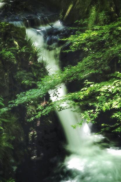 青モミジと小滝