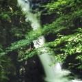 Photos: 青モミジと小滝