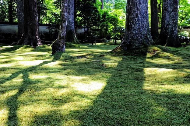 三千院の苔庭