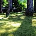 Photos: 三千院の苔庭