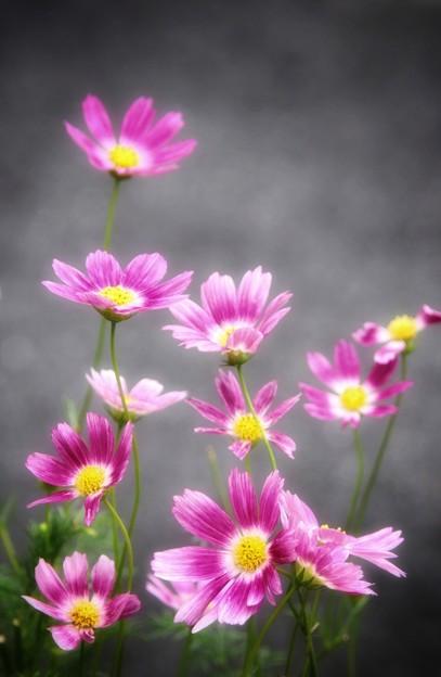 Photos: 近所の花