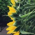 Photos: 花を支える裏方さん