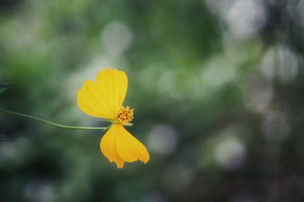 Photos: 生まれ変わったら蝶になりたい