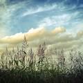 秋の空と野草