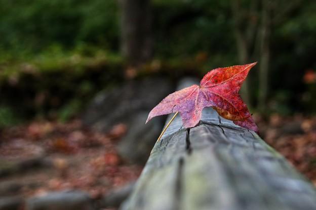 Photos: 秋の味わい