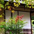 Photos: 秋の風情