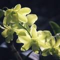 Photos: Mild yellow