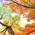 Photos: 頭上の秋