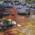 Photos: 秋に染まる川面
