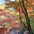 Photos: 鞍馬寺の紅葉(2)