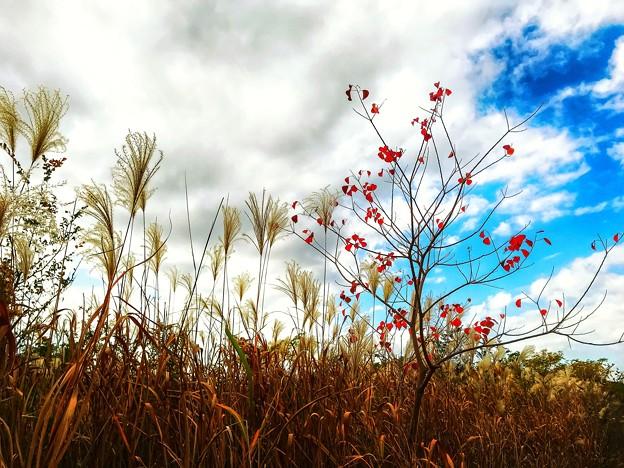 河川敷の秋