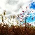Photos: 河川敷の秋